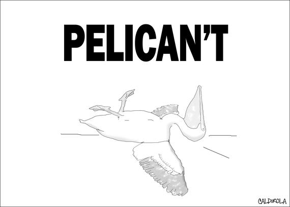 2016-05-09-1462815762-9262704-PelicantBrianCaldirola.png