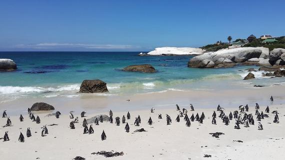 2016-05-10-1462852482-5905936-penguins857208_1280.jpg