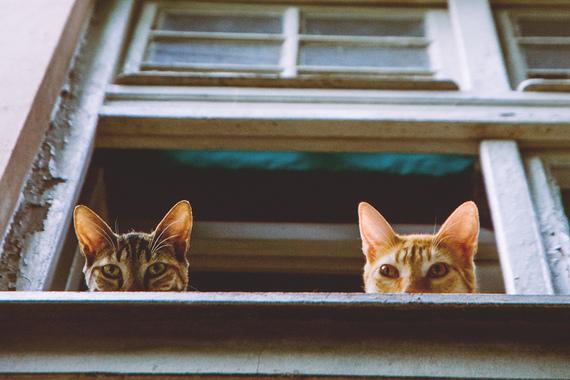 2016-05-10-1462897444-2355248-CatsLookingOutWindow050516.jpg