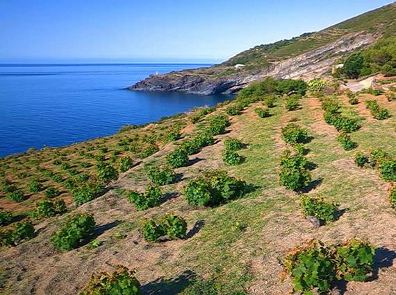 2016-05-12-1463062913-1100764-pantelleriazibibbo.jpg