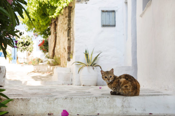 have kitty, will travel -- internationally