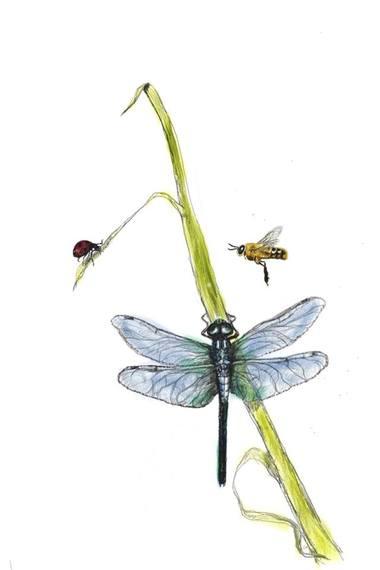 2016-05-15-1463323915-1909548-Ms.LadybugandMr.HoneyBeetrioDragonfly.jpg