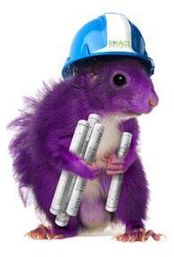 2016-05-17-1463508124-4054415-engineer_purple_squirrel_crop.jpg