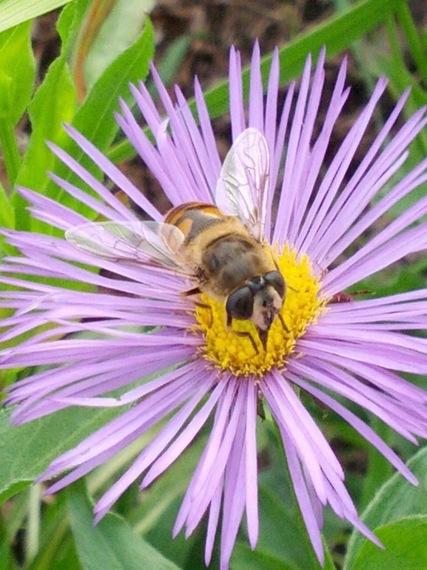 2016-05-17-1463520505-8482854-beeandflower.jpg