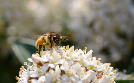 2016-05-19-1463694230-7339013-honeybee2.jpg