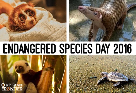 2016-05-20-1463738032-8809599-endangeredday.png