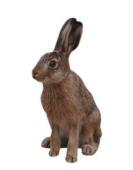 2016-05-23-1464020219-7970918-hare1348865.jpg