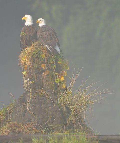 2016-05-24-1464114636-9342170-Eagles_Mist.jpg