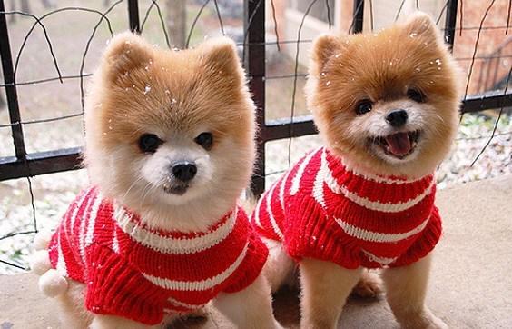 2016-05-24-1464124315-5567440-identicaldogs.jpg