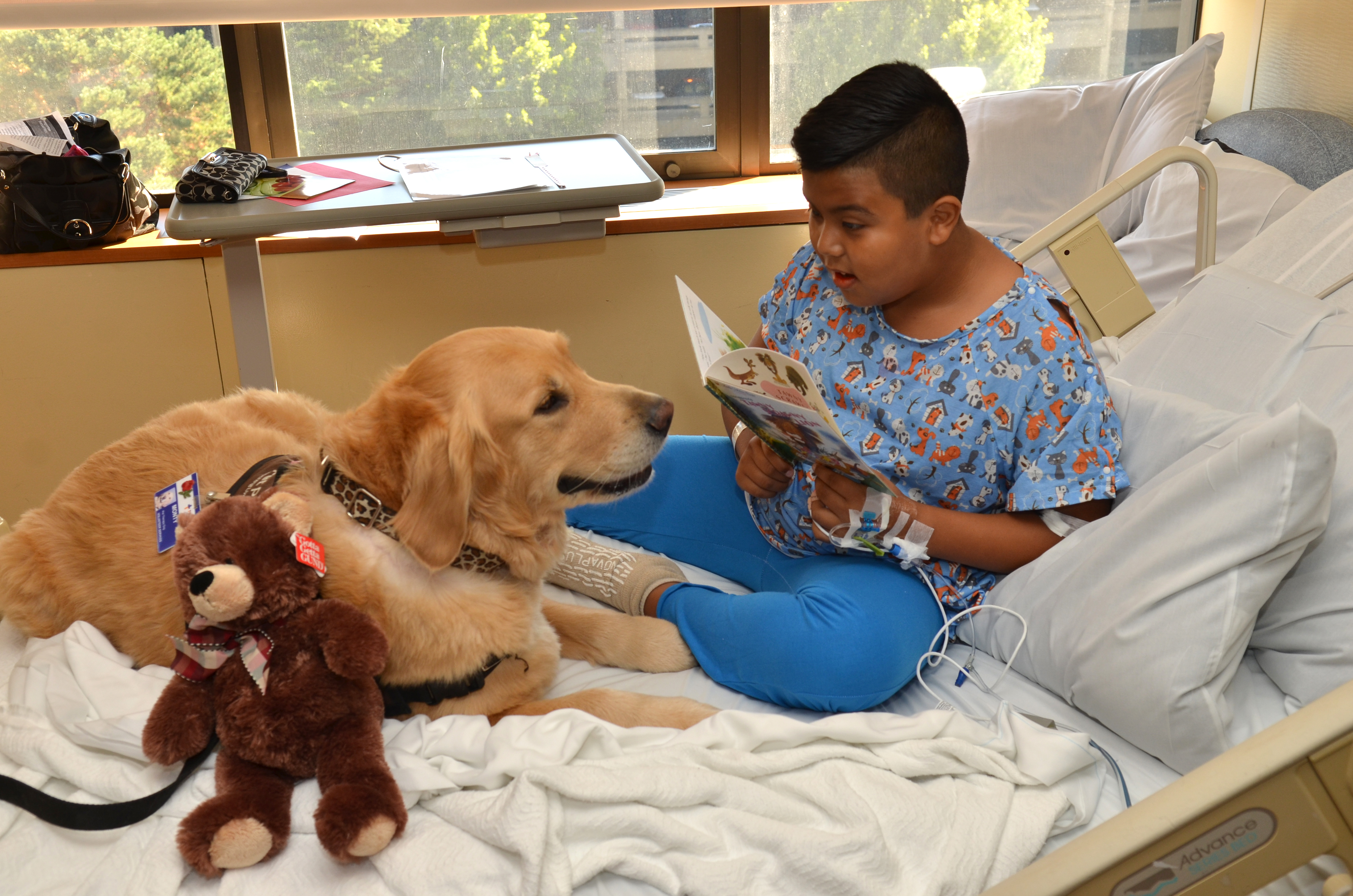 At Home Physical Therapy For Dogs