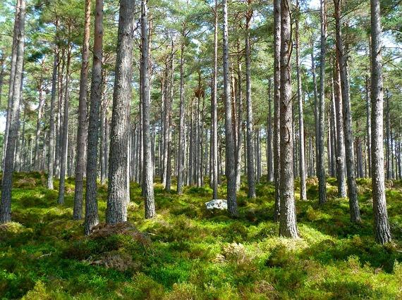 2016-05-26-1464293389-3411120-forest272595_960_720.jpg