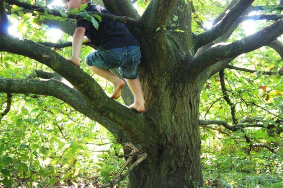 2016-05-30-1464600939-5711578-climbingtree.jpg