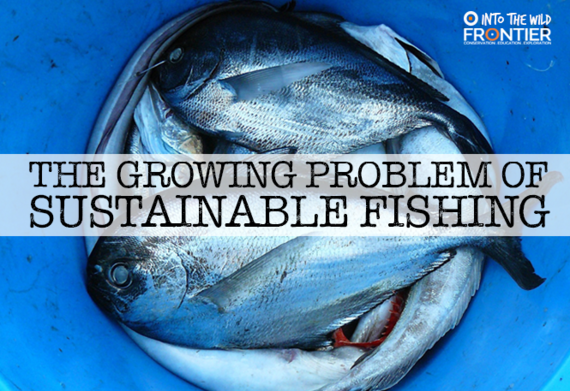 The growing problem of sustainable fishing for Most sustainable fish