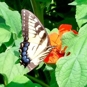 2016-06-02-1464838012-6186584-butterfly.jpg