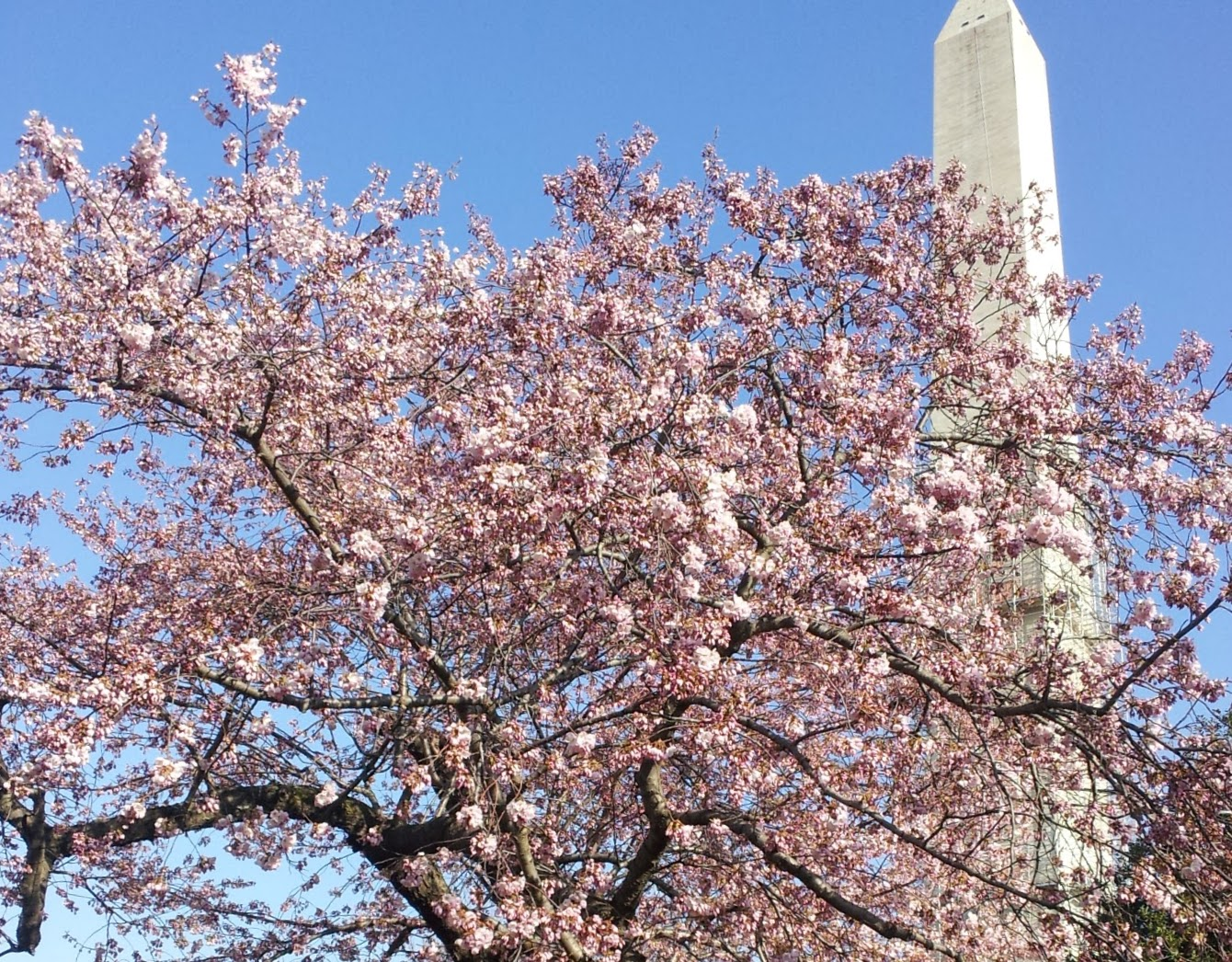 The Best Time to Visit Washington DC | HuffPost