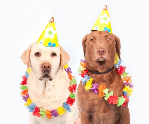 2016-06-06-1465241291-3848053-dogs1190015_1280.jpg