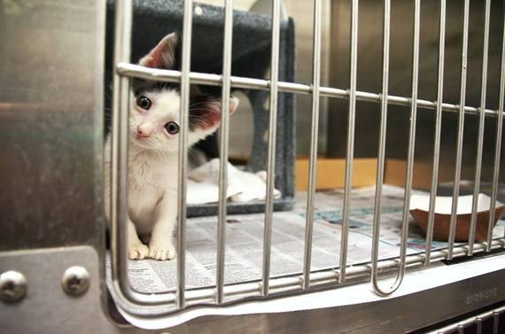 2016-06-06-1465246799-6353602-kittens3.jpg