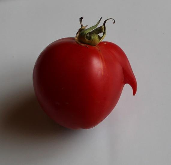 2016-06-07-1465284940-2183359-tomatoelephantcropped2.jpg