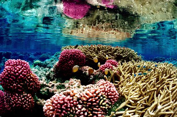 2016-06-07-1465305082-1109637-coralreefpanamaflickr.jpg