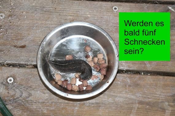 2016-06-07-1465313166-282906-008HuffPostSchneckenIMG_5470Heikoc.jpeg