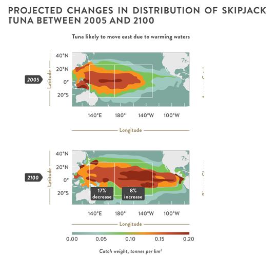 Impact of climate change on skipjack tuna distribution