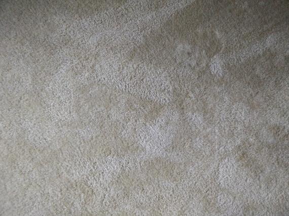 2016-06-07-1465342912-7785996-Carpet.jpg