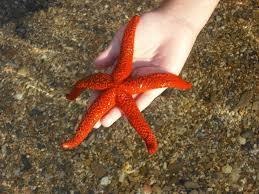 2016-06-09-1465447389-8472035-Starfish.jpg