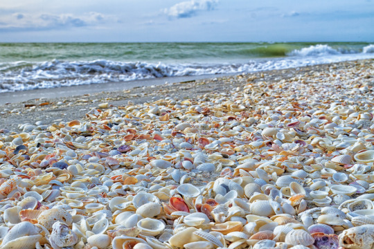 Best Beach In San Diego For Shells