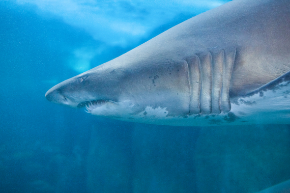 2016-06-13-1465827418-6079207-sharktank.jpg