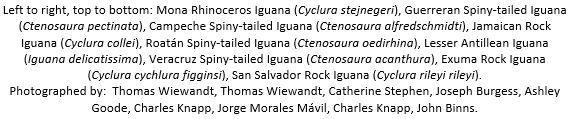 2016-06-13-1465837288-7529149-IguanaCaption.JPG