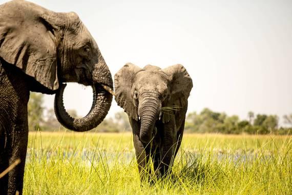 2016-06-17-1466128340-9203959-elephant5.jpg