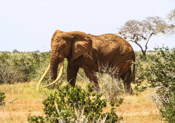2016-06-17-1466128389-5185558-elephant1.jpg