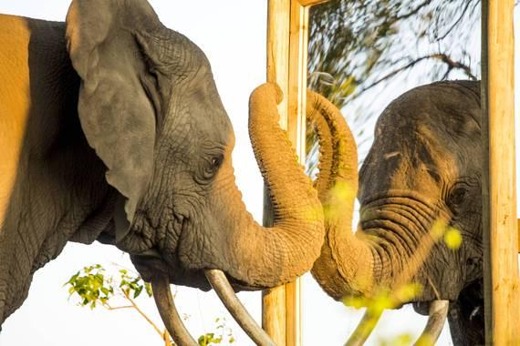 2016-06-17-1466128446-7145031-elephant4.jpg