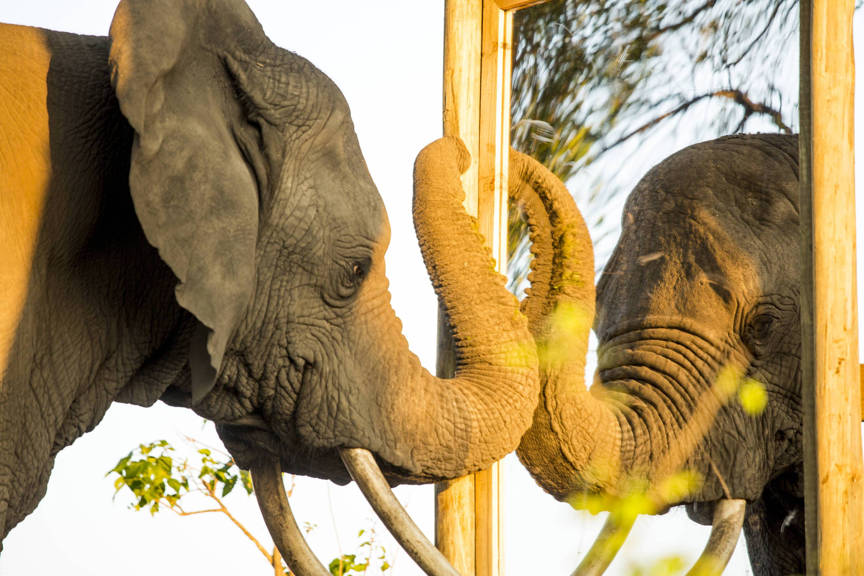 Elephants are pretty smart some people are not but people have guns huffpost - Test dello specchio ...