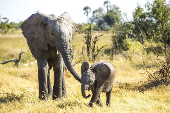 2016-06-17-1466128510-3645872-elephant3.jpg