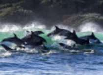 2016-06-17-1466198480-5413164-dolphins.jpg