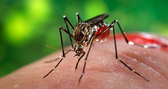 2016-06-20-1466452999-8878751-Zikavirus.jpg