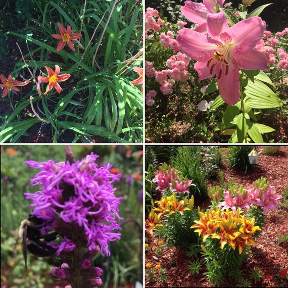 2016-06-23-1466712532-8144963-Gardens1.jpg