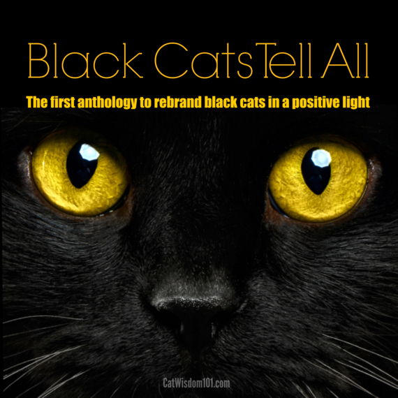 2016-06-27-1467063949-7417701-black_cats_tell_all.png