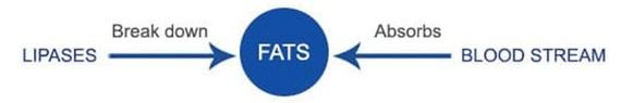 2016-06-29-1467222302-43366-Fats.jpg