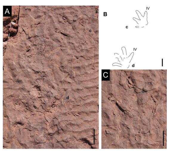 2016-07-05-1467722759-8968295-footprints2.jpg