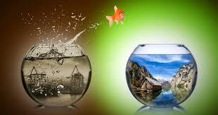 2016-07-06-1467839217-3585147-fishjumping.jpg