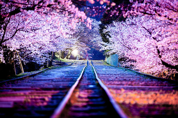 2016-07-11-1468261765-233254-japanesecherryblossombloomingsakura.jpg