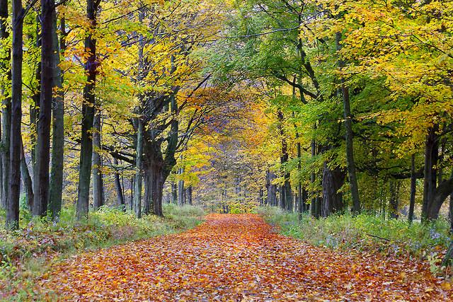 5 Must-Visit Fall Foliage Destinations On America's East Coast