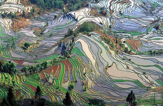 2016-07-12-1468288665-4777439-YunnanRiceTerraces.jpg