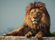 2016-07-12-1468365597-3693274-lion.jpg
