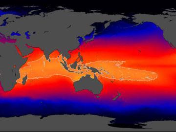 Climate Change This Week Massive Worldwide Tree Die Off