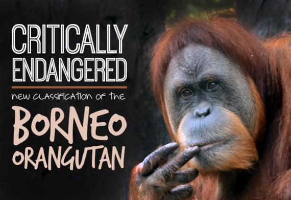 2016-07-14-1468501891-3020725-orangutan.png