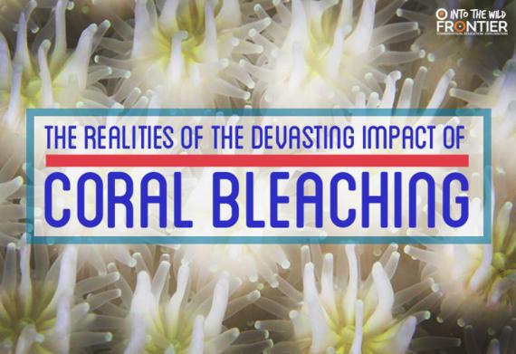 2016-07-18-1468833953-9138196-coralbleaching2.png