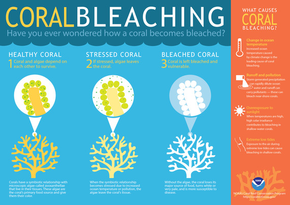 2016-07-18-1468833997-9326791-coralbleachinglarge.jpg